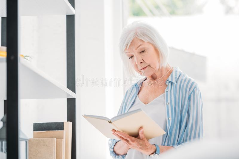 portrait of grey hair woman royalty free stock photography