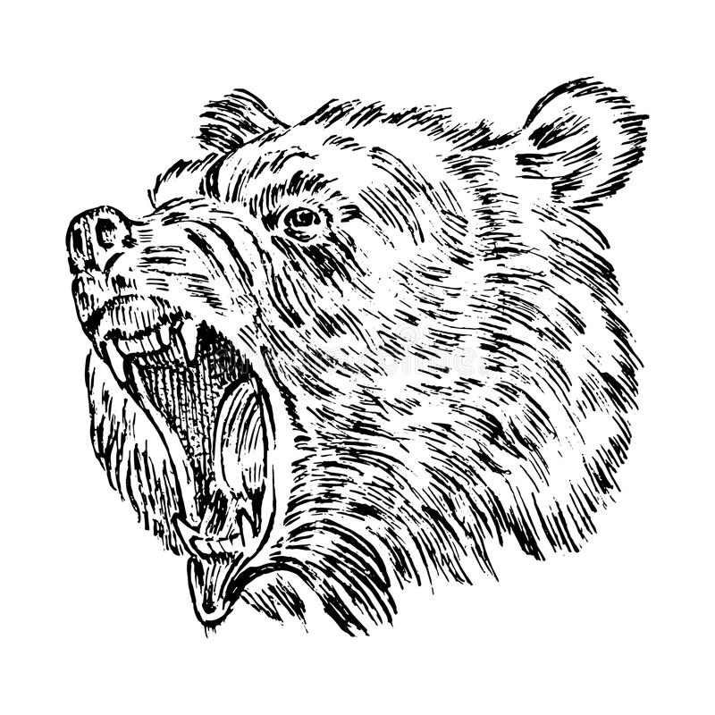 Portrait of Grizzly Bear. head of a wild animal. angry roar of a predator. Badge or emblem Vector illustration. Engraved. Hand drawn old monochrome Vintage stock illustration