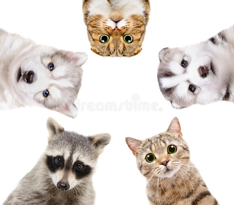 Portrait of a group of animals royalty free stock photography
