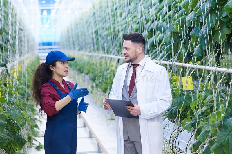 Female Worker Talking to Scientist in Plantation stock images