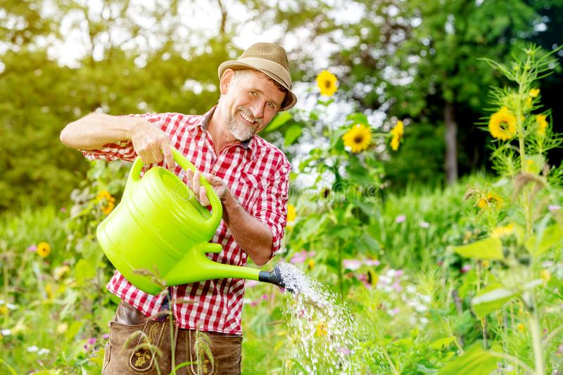 Handsome bavarian man standing in the garden and watering the flowers royalty free stock photo