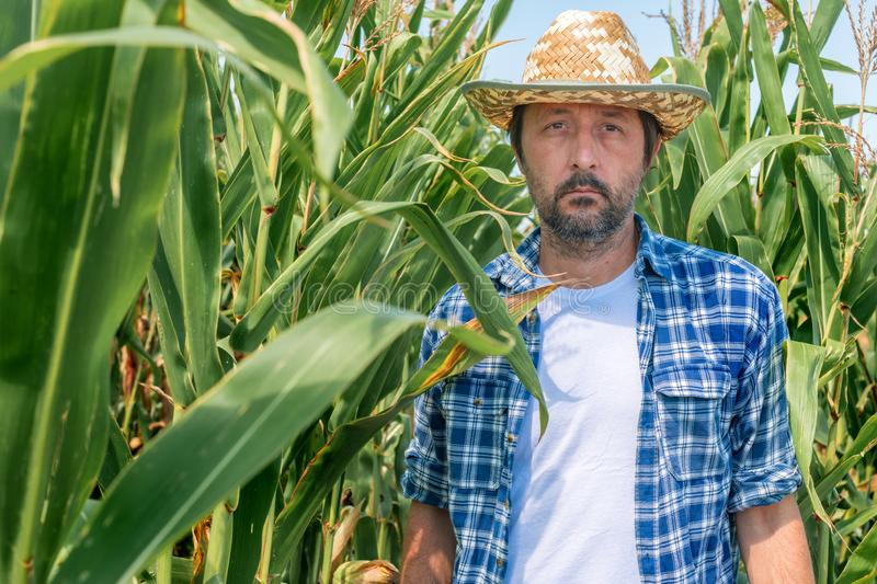 Portrait of handsome corn farmer in cultivated maize field royalty free stock image