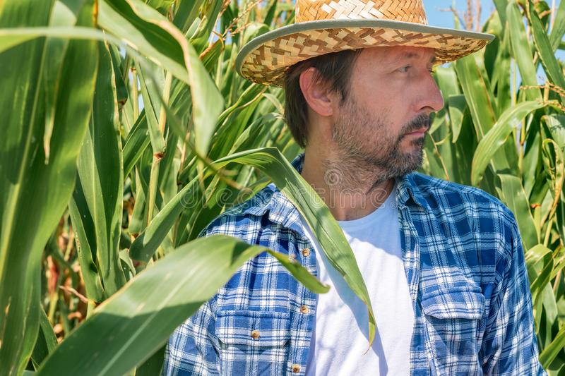 Portrait of handsome corn farmer in cultivated maize field royalty free stock photo