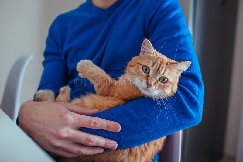 Portrait of handsome young man holds a red cat in his arms on the kitchen. stock image