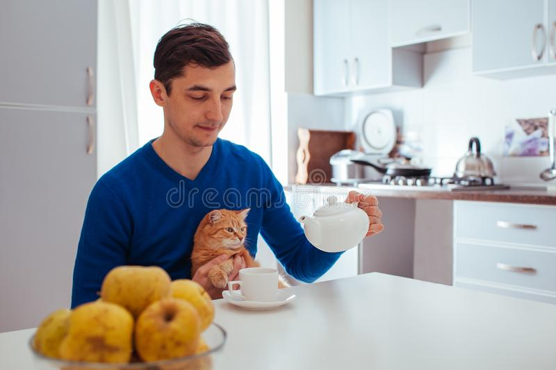 Portrait of handsome young man pours tea with cat on the kitchen.  royalty free stock image