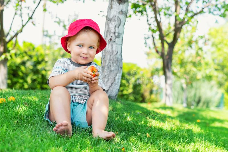 Portrait of happy Cute adorable toddler boy sitting on green grass and eating ripe juicy organic apple in fruit garden under trees. Funny caucasian blond child royalty free stock photos