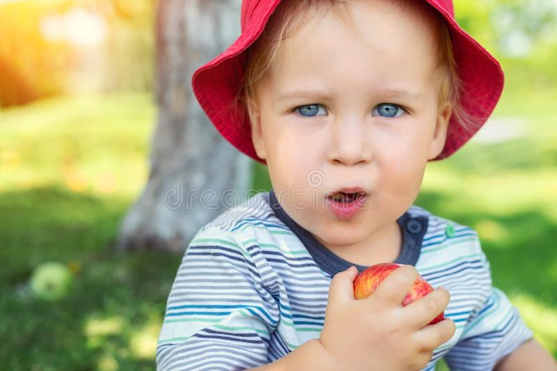 Portrait of happy Cute adorable toddler boy sitting on green grass and eating ripe juicy organic apple in fruit garden under trees. Funny caucasian blond child stock photography