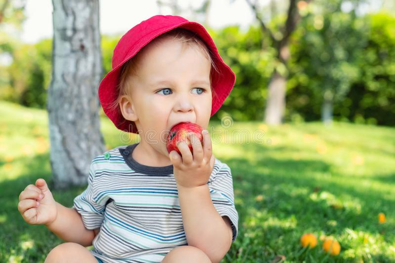 Portrait of happy Cute adorable toddler boy sitting on green grass and eating ripe juicy organic apple in fruit garden under trees. Funny caucasian blond child royalty free stock images