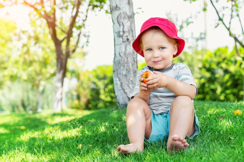 Portrait of happy Cute adorable toddler boy sitting on green grass and eating ripe juicy organic apple in fruit garden under trees. Funny caucasian blond child stock image