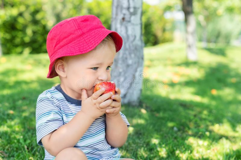 Portrait of happy Cute adorable toddler boy sitting on green grass and eating ripe juicy organic apple in fruit garden under trees royalty free stock photo