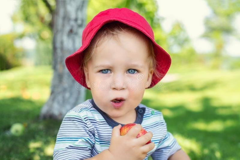 Portrait of happy Cute adorable toddler boy sitting on green grass and eating ripe juicy organic apple in fruit garden under trees royalty free stock photography
