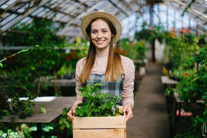 Portrait of happy gardener walking in hothouse with box of plants smiling royalty free stock photos