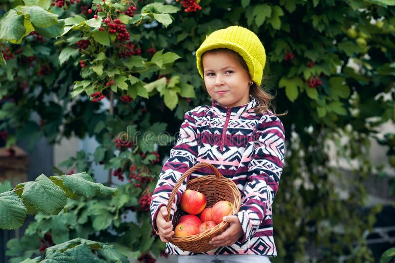 Little girl with fresh apples on the plot royalty free stock photography