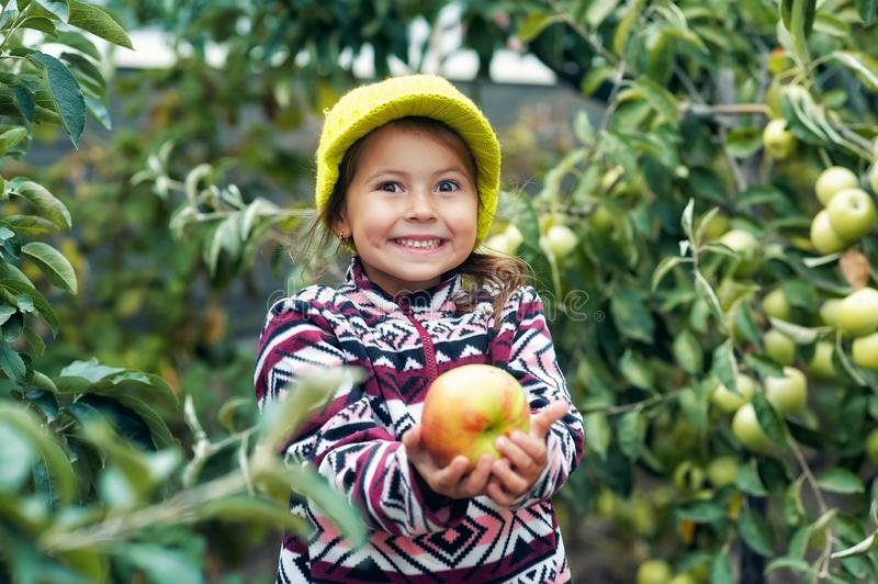 Little girl with fresh apples on the plot stock images