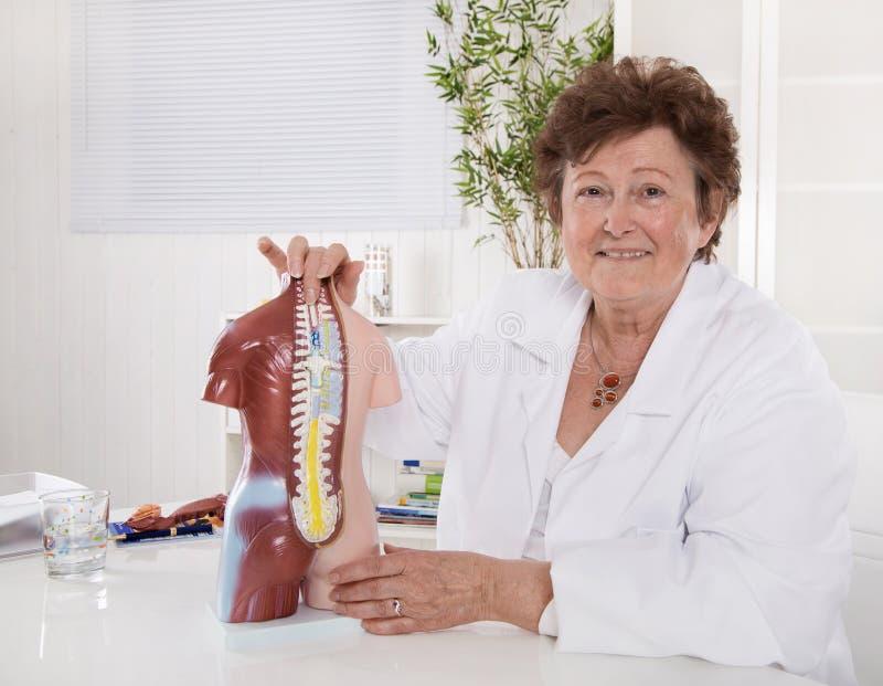 Portrait of happy older senior doctor explaining the human body. Portrait of happy older senior doctor or professor explaining the human body with a torso royalty free stock photo
