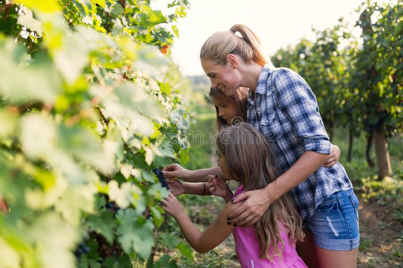 Portrait of happy people spending time in vineyard stock image