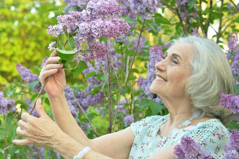 Portrait of happy senior beautiful woman with lilacs in spring park. Happy senior beautiful woman with lilacs in spring park royalty free stock photos