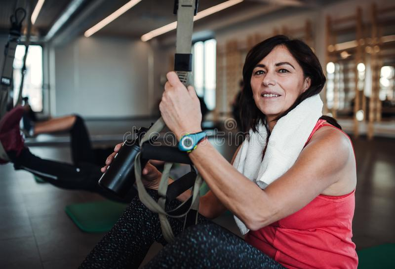 A portrait of senior woman in gym doing exercise with TRX. Copy space. royalty free stock photo