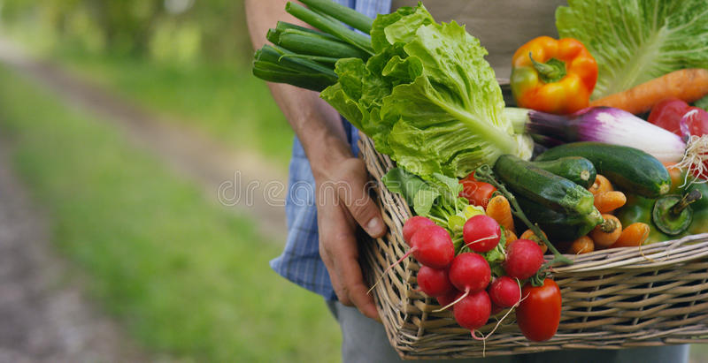 Portrait of a happy young farmer holding fresh vegetables in a basket. On a background of nature The concept of biological, bio pr. Oducts, bio ecology, grown by royalty free stock photography