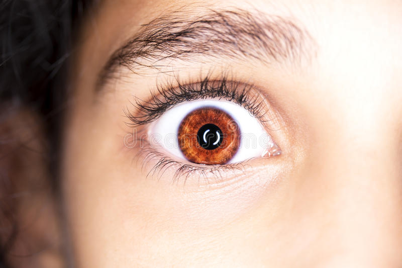 Portrait haut étroit de macro des yeux bruns de jeunes filles photo stock