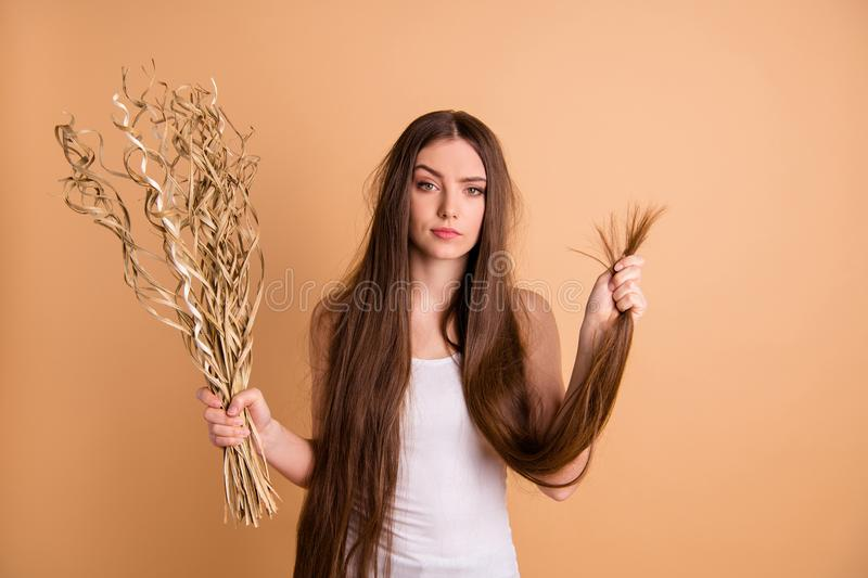 Portrait of her she nice-looking attractive gloomy moody grumpy lady holding in hand dried flower messy thin weak ends. Portrait of her she nice-looking royalty free stock photography