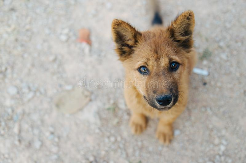 Portrait of Homeless dog, Stray dog, Vagrant dog sitting outside watching staring at camera. stock images