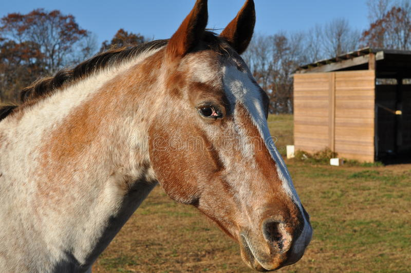 Download Portrait of horse stock image. Image of field, portrait - 12069817