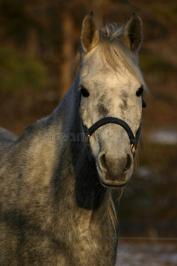 Download Portrait of a horse stock image. Image of ride, mare, eyes - 142243