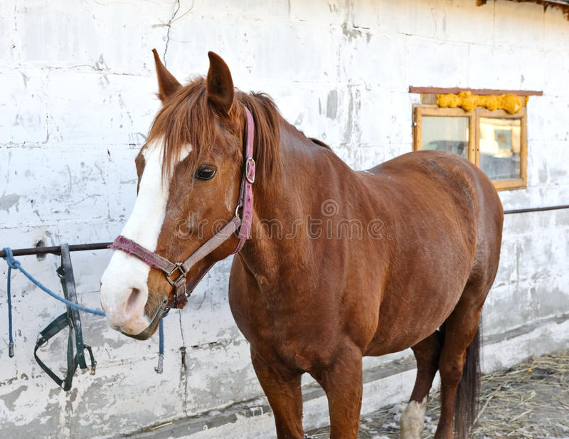 Download A portrait of a horse stock image. Image of mare, affectionate - 20928397