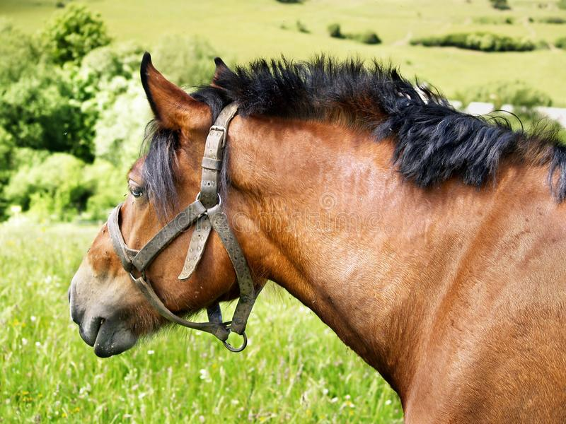 Portrait of horse. On the green meadow stock image