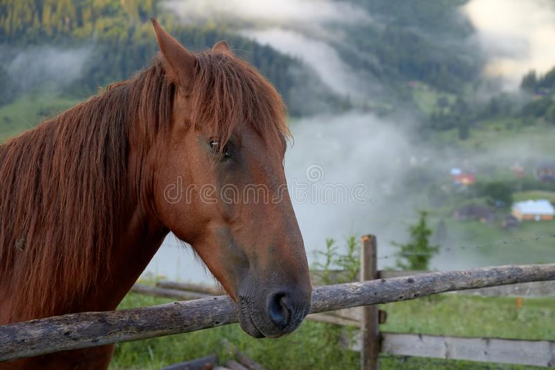 Portrait of a horse, on a background of green misty mountains in the morning at sunrise stock image
