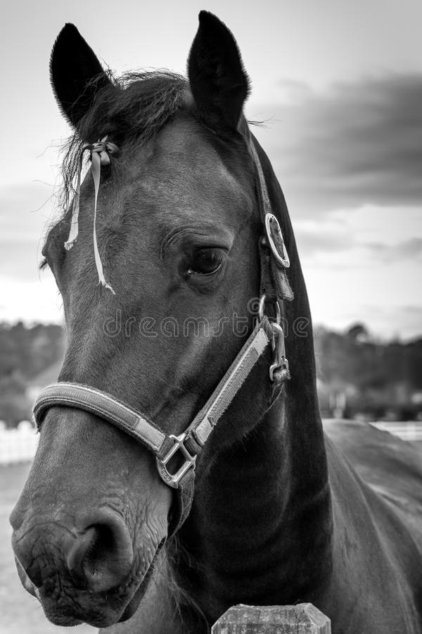 Portrait of a horse stock image