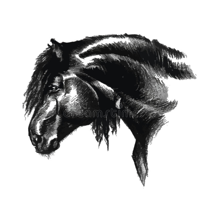 Portrait of horse in black and white art drawing stock illustration