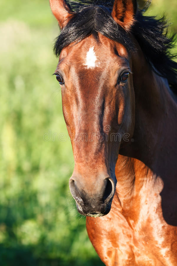 Download Portrait Horse Close-up On A Background Of Grass Stock Image - Image: 83716939