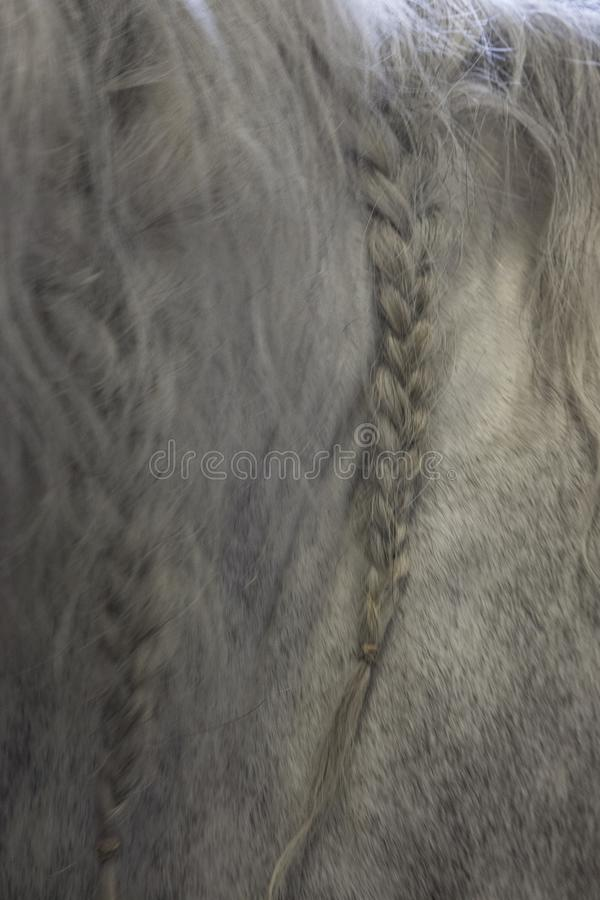 Portrait of a horse in his stable stock photo