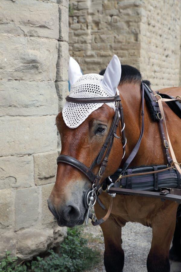Portrait of a horse's head close-up stock photos