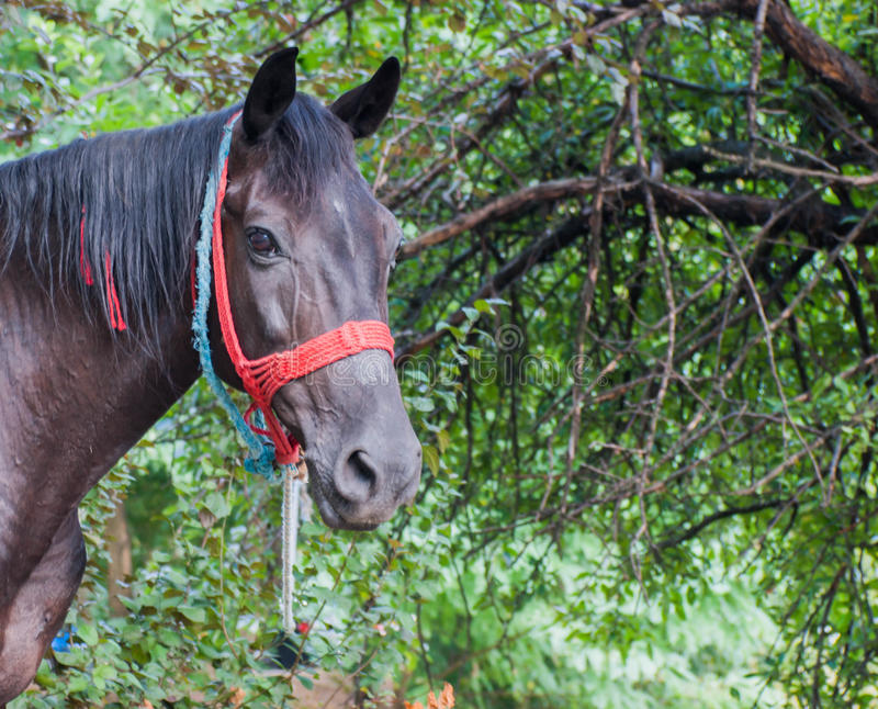 Portrait of horse. On the street stock photography