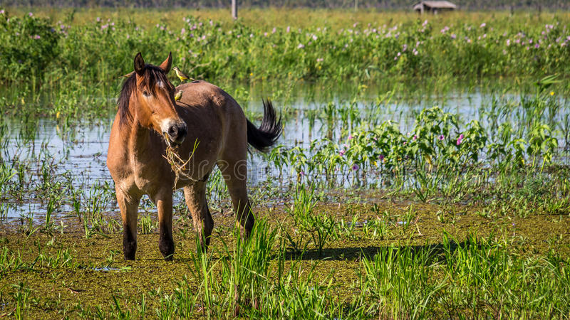 Portrait of a horse with two birds sitting on its back stock photos