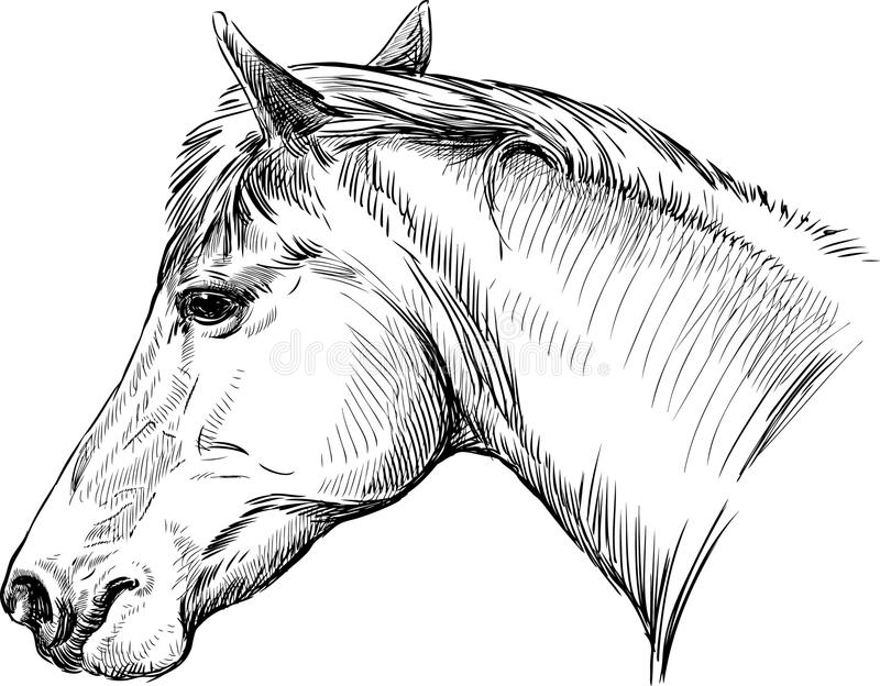 Download Portrait of horse stock photo. Image of drawn, ears, portrait - 31905104