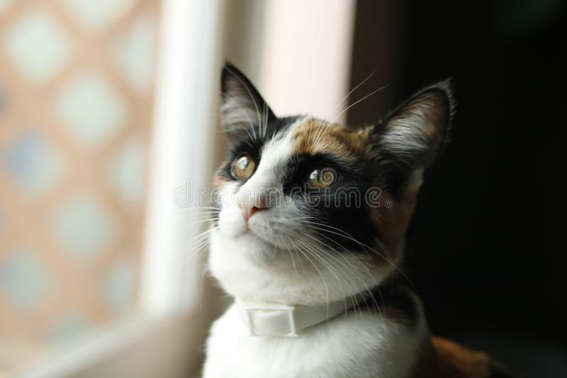 Portrait of house cat by window royalty free stock photography