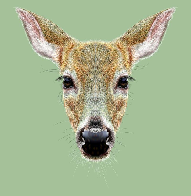 Portrait illustré de Roe Deer sur le fond vert illustration libre de droits