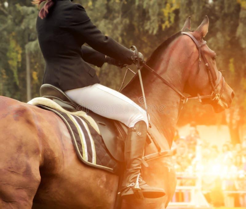 Horse rodeo rider male saddle dressage royalty free stock photo
