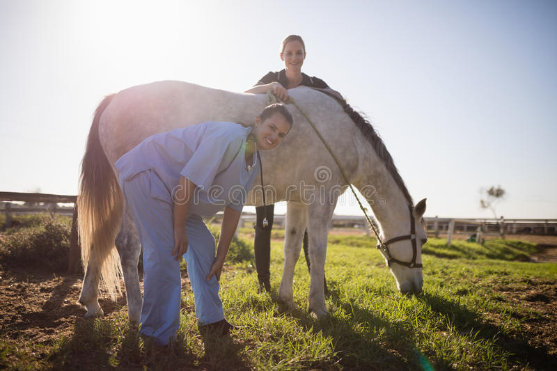 Portrait of jockey and vet standing by horse at barn. During sunny day royalty free stock images