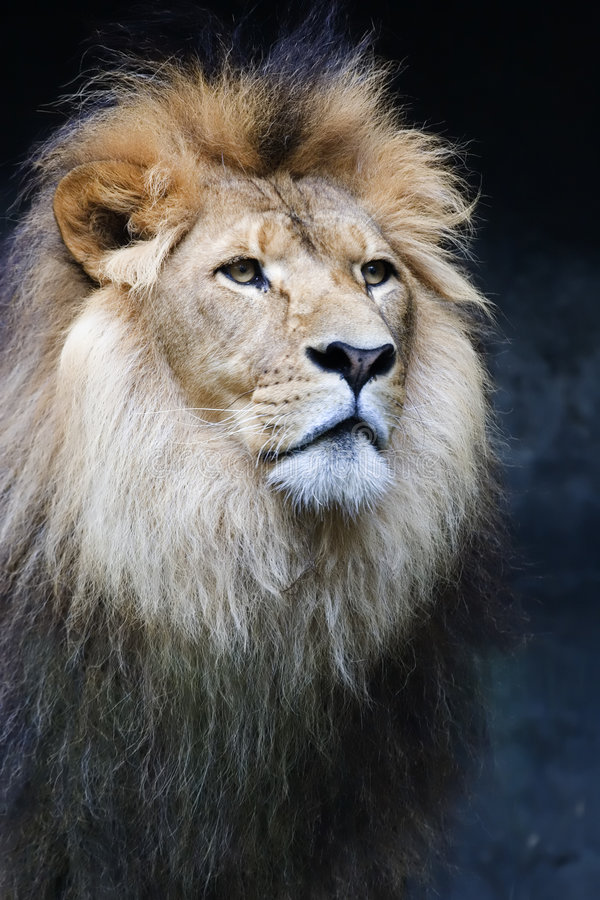 Portrait of a king royalty free stock image