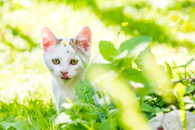 Portrait of a kitten in the grass with clear background stock photos