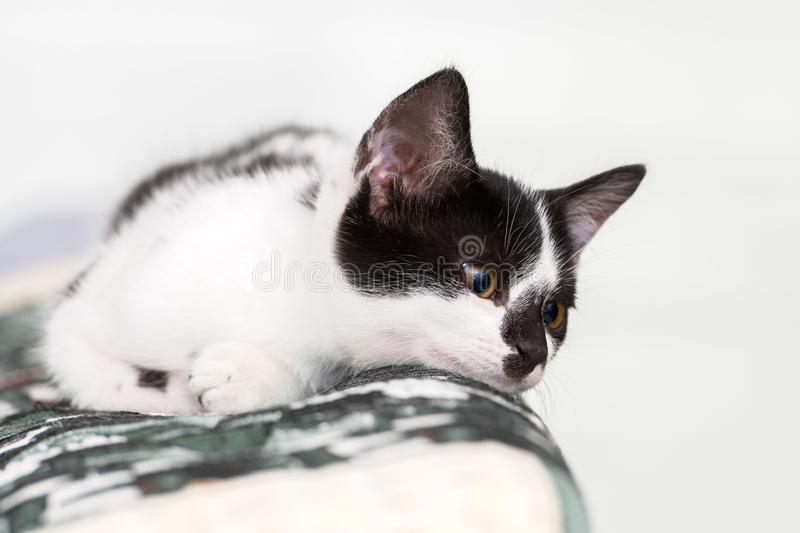 Portrait of a kitten with clear white background stock photo