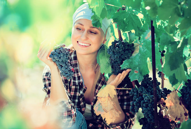 Portrait of laughing female worker at grape farm royalty free stock photo