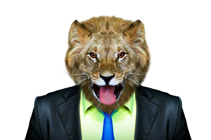 Portrait of a lion in a business suit royalty free stock photos