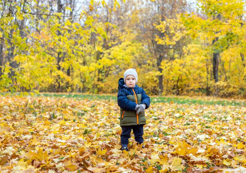 Portrait of little boy in autumn park royalty free stock photography