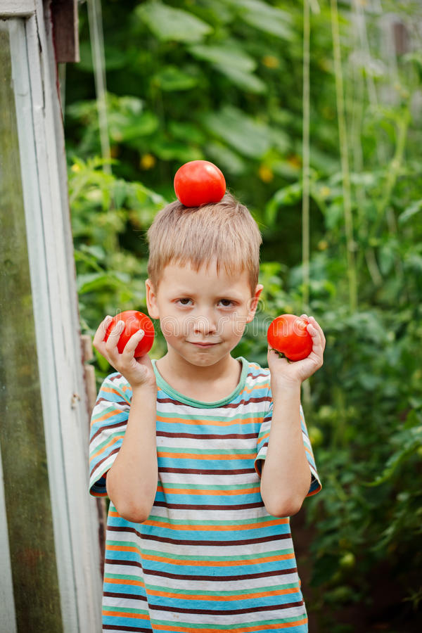 Portrait of little boy holding ripe tomatoes in the greenhouse. stock image